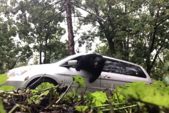 Όταν κλειδώνεις κατά λάθος μέσα σε αυτοκίνητο μια... αρκούδα (video)