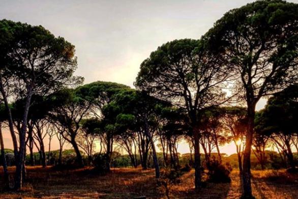 Δάσος Στροφυλιάς - Μια από τις πιο ξεχωριστές γωνιές της Ελλάδας (pics+video)