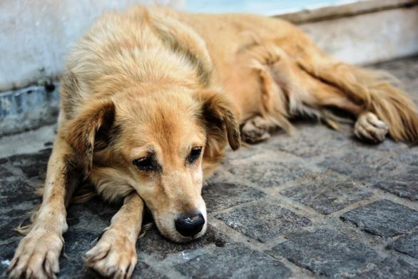 Δυτική Ελλάδα: Δηλητηρίασαν εννέα σκύλους