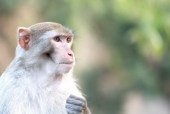 Βιετνάμ - Σκότωσαν και έφαγαν μαϊμού σε ζωντανή μετάδοση στο Facebook