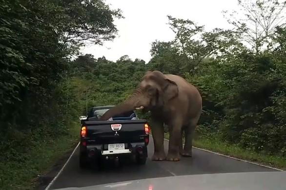 Ελέφαντας κάνει επιδρομή σε φορτηγάκι (video)