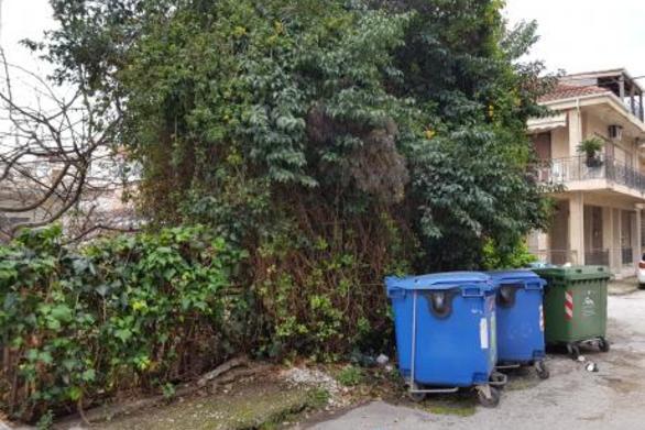 """Πάτρα: Αγέλη σκύλων στην Τερψιθέα - Ορμητήριό τους, ένα οικόπεδο """"ζούγκλα"""""""