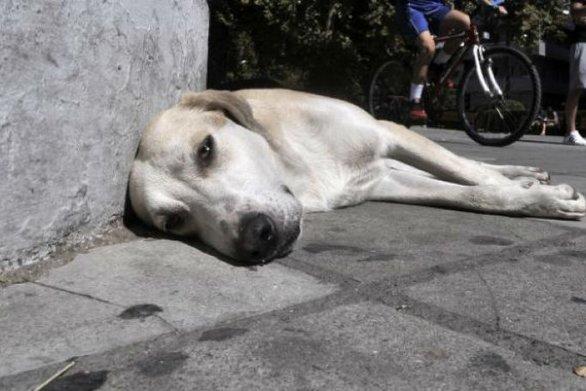 Σοκ στην Δυτική Αχαΐα - Πυροβόλησαν και σκότωσαν σκύλο