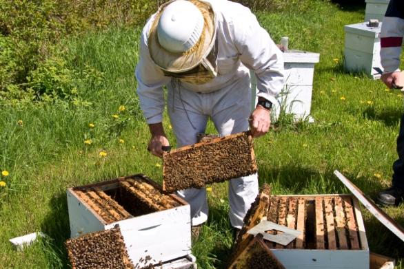 Στην Πάτρα θα πραγματοποιηθεί το 3ο Πανελλήνιο Συνέδριο Επαγγελματικής Μελισσοκομίας