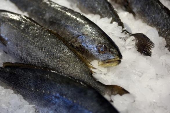 Κατάσχεση ακατάλληλων αλιευμάτων σε ψυκτική αποθήκη του Πειραιά