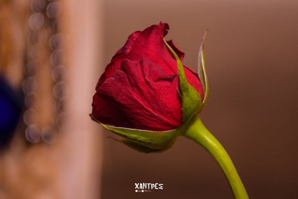 Valentine's Day στις Χάντρες 14-02-19