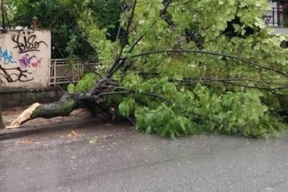 Πτώσεις δέντρων από τους ισχυρούς ανέμους που πλήττουν την Πάτρα