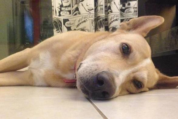 Δυτική Ελλάδα: Έδωσε δηλητηριασμένη τροφή σε σκύλο