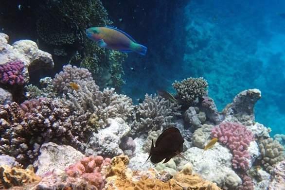 Εντοπίστηκε ο πρώτος κοραλλιογενής ύφαλος της Μεσογείου