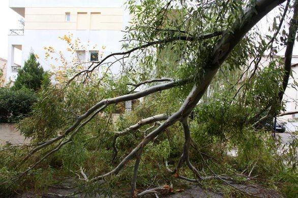 Πυροσβεστική: 138 κλήσεις για πεσμένα δέντρα στην Αττική