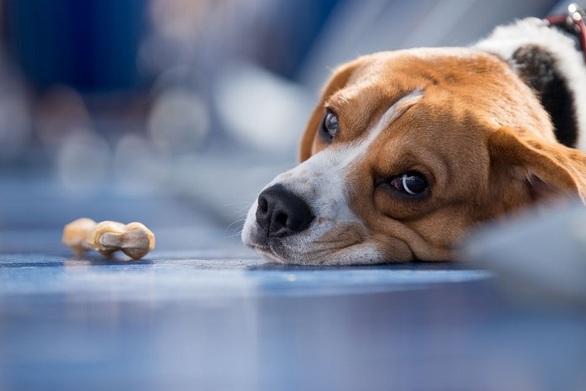 Ηλεία: Άγνωστοι θανάτωσαν σκύλους σε περιοχές των Λεχαινών