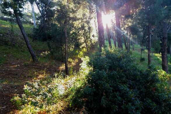"""Όταν ο ήλιος """"κρύβεται"""" στις φυλλωσιές των δέντρων"""