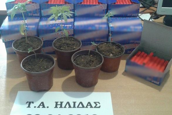 Δυτική Ελλάδα: Καλλιεργούσε κάνναβη και είχε και κροτίδες στην κατοχή του