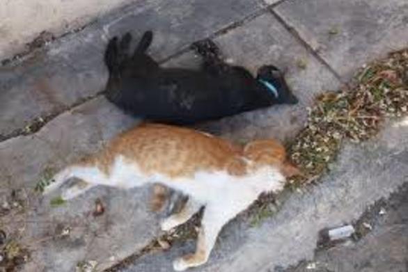 Ηλεία: Έριξε σε γάτες δηλητηριασμένη τροφή