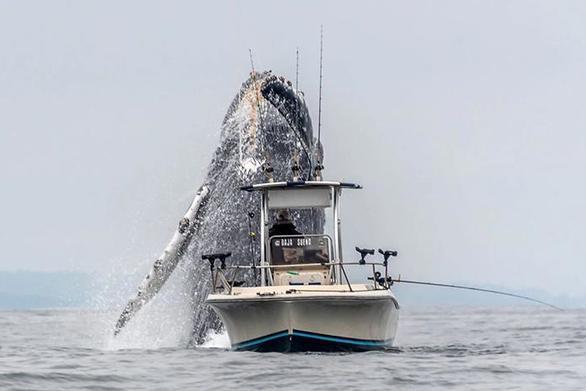 Το απίστευτο άλμα μιας φάλαινας έγινε viral (video)