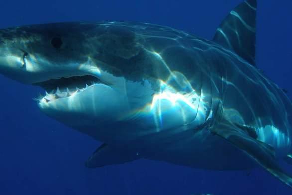 17χρονη κολυμβήτρια δέχθηκε επίθεση από καρχαρία