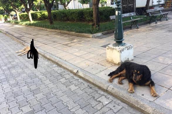 """Συγκίνηση στην Πάτρα για τον ξανθούλη αδέσποτο σκυλάκο που """"έφυγε"""""""