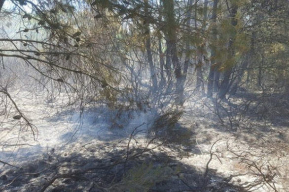 Δυτική Αχαΐα: Τι άφησε πίσω της η φωτιά στα Τσαμέικα (φωτο)