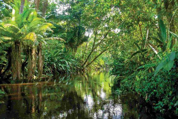 Στοιχεία σοκ! Ο Αμαζόνιος «πεθαίνει» στα… χέρια του Μπολσονάρο