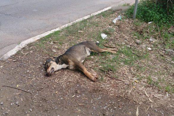 Αχαΐα - Άγνωστος δηλητηρίασε σκύλο
