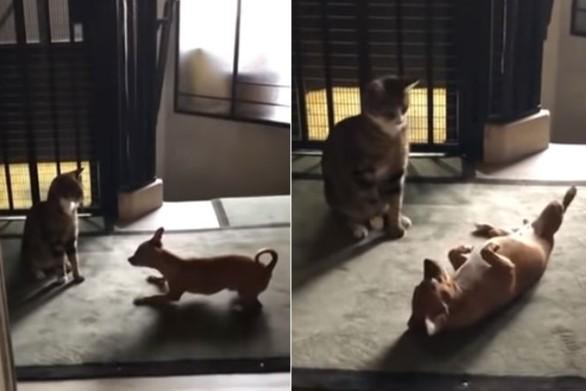 Σκύλος προσπαθεί να πιάσει φιλία με μια γάτα (video)