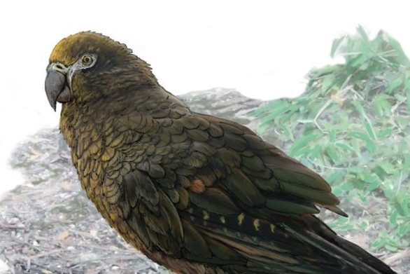 Βρέθηκε απολίθωμα παπαγάλου «γίγαντα» που ζύγιζε 7 κιλά!