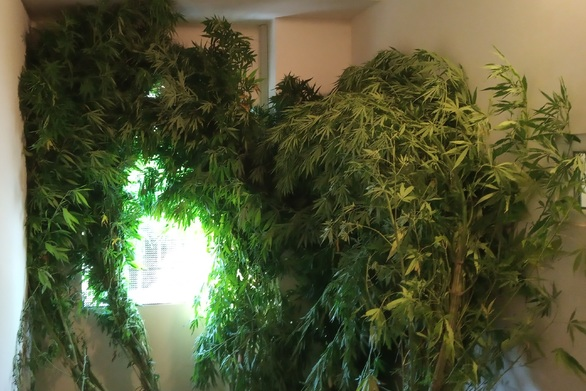 Συνελήφθη καλλιεργητής ναρκωτικών στην Ηλεία