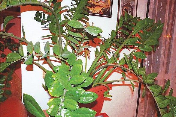 Αυτό είναι το πιο ανθεκτικό φυτό για το σπίτι