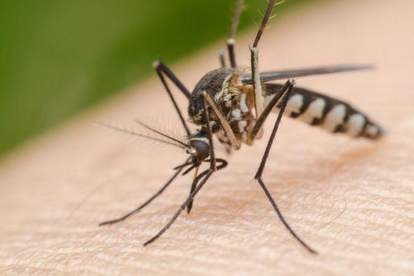 Τσίμπημα κουνουπιού άφησε 64χρονο εγκεφαλικά νεκρό μέσα σε εννιά μέρες