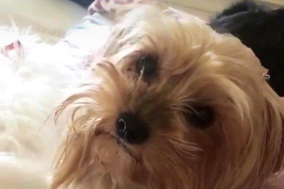 Πάτρα: Βρέθηκε το σκυλάκι που είχε χαθεί στην περιοχή του Αγ. Ιωάννη Πράτσικα