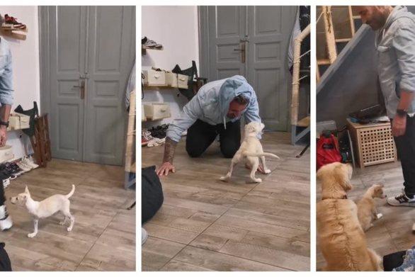 Ο Γιώργος Μαυρίδης με το σκυλάκι που βασανίστηκε στην Ξάνθη (vids)