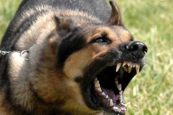 Πάτρα - Ο σκύλος τη δάγκωσε, ο ιδιοκτήτης την έβρισε