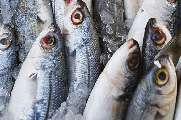Κατασχέθηκαν ακατάλληλα ψάρια στην ιχθυόσκαλα Νέας Μηχανιώνας