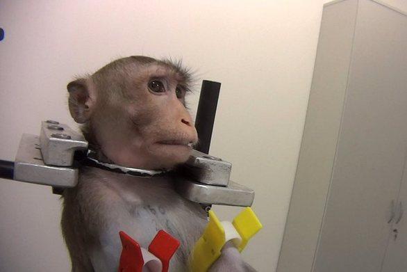 Γερμανία: Βίντεο γροθιά στο στομάχι με βασανιστήρια σε πειραματόζωα