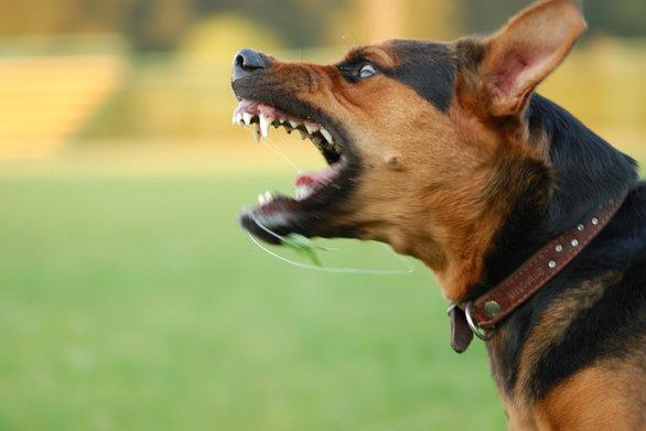 Δυτική Ελλάδα - Σκύλος δάγκωσε στο πόδι έναν 37χρονο