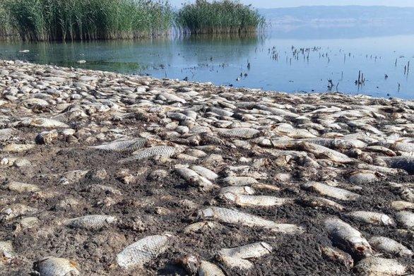 Κορώνεια: Αρνητικά τα νεκρά ψάρια της λίμνης σε παθογόνους οργανισμούς και βαρέα μέταλλα