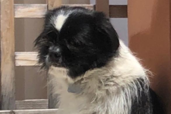 Πάτρα: Χάθηκε σκυλάκι στην περιοχή του Καστελόκαμπου