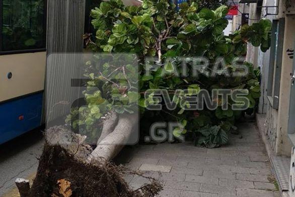 Προσοχή όταν περπατάτε στην Πάτρα - Πέφτουν δέντρα εξαιτίας του δυνατού αέρα (φωτο)