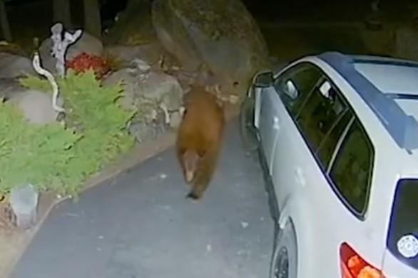 Αρκούδα ανοίγει αυτοκίνητο με μία κίνηση (video)