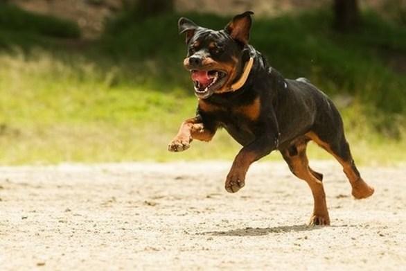 Πάτρα: Γυναίκα δέχθηκε επίθεση από τρία σκυλιά