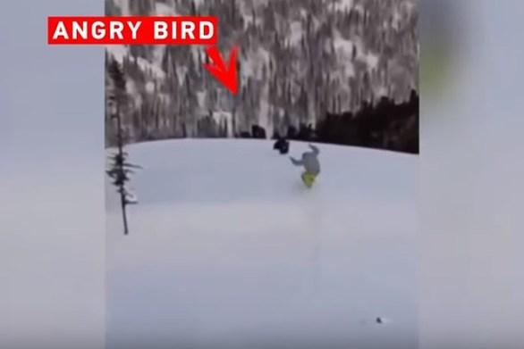 Η εκδίκηση του πουλιού σε έναν... απρόσεχτο σκιέρ (video)