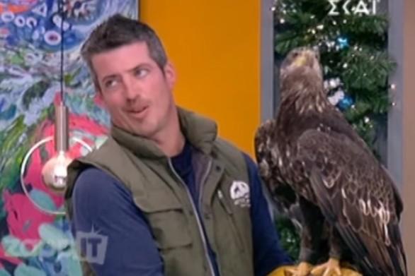 Ένας αετός έφερε απροόπτα στην εκπομπή του Γιώργου Λιάγκα (video)