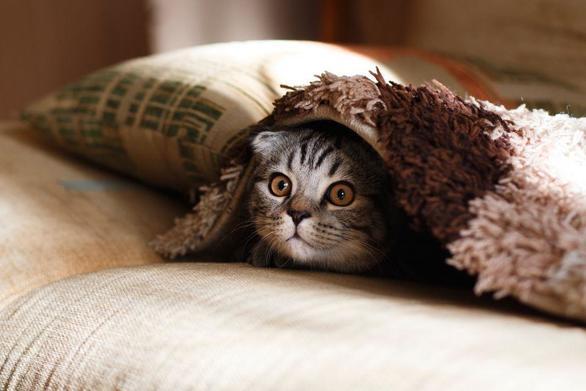 Βρετανία: Γάτα βρέθηκε ζωντανή σε μηχανή αυτοκινήτου μετά από ταξίδι 200χλμ