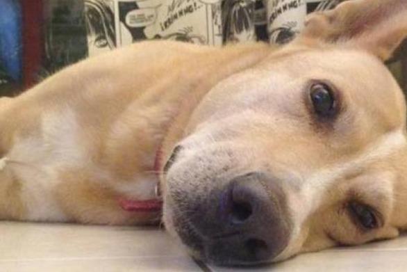 Πύργος: Έδωσε δηλητηριασμένη τροφή σε σκύλους
