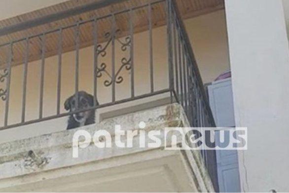 Ηλεία: Έφυγε για 10 μέρες και άφησε τον σκύλο στο μπαλκόνι