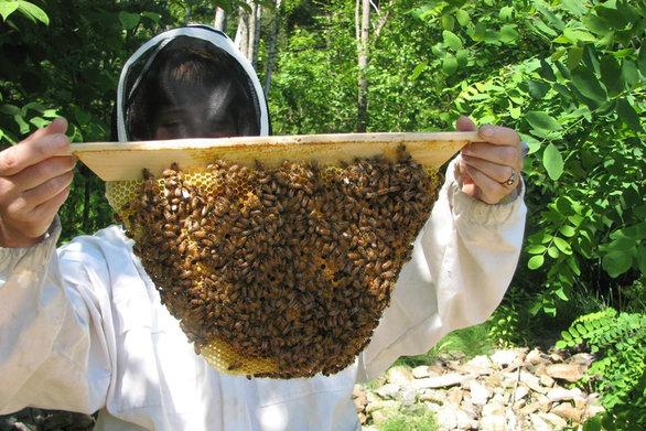 """Το μέλι """"κεντρί"""" για την οικονομία της Αχαΐας; - Πού """"κολλάει"""" η ανάπτυξή του"""