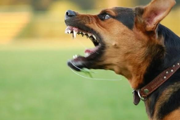 Πάτρα: Καταγγελία για άγρια σκυλιά στις Εργατικές Κατοικίες της Λεύκας