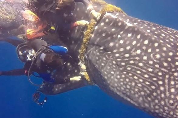 Μια εκπληκτική διάσωση φαλαινοκαρχαρία (video)
