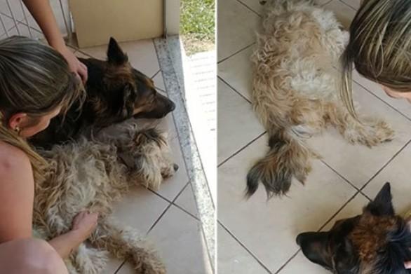 Σκύλος θρηνεί σπαρακτικά το φίλο του που... κοιμάται (video)