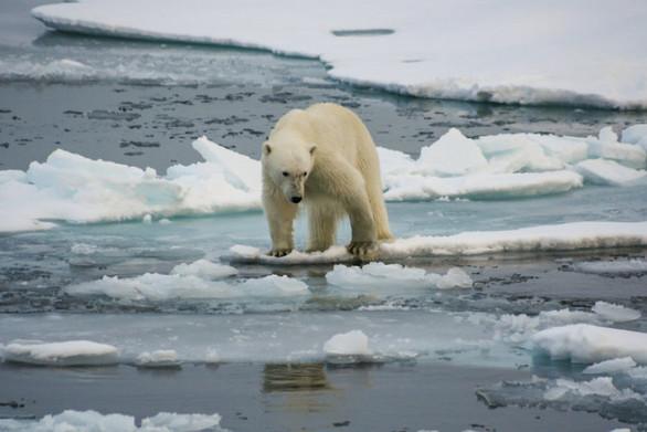 H κλιματική αλλαγή έσπασε όλα τα ρεκόρ υψηλών θερμοκρασιών το 2019